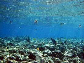 foto of damselfish  - A shallow reef plate with algae and damselfish - JPG