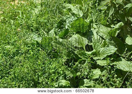 Meadow Motley Grasses