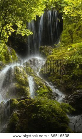 waterfall and dense vegetation in green forest with moss