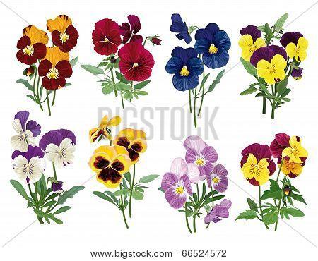 Set Of Multicolored Pansies