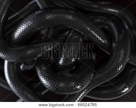 Snakes Abstract Background