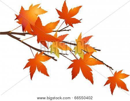 The view of maple leaf in the bough