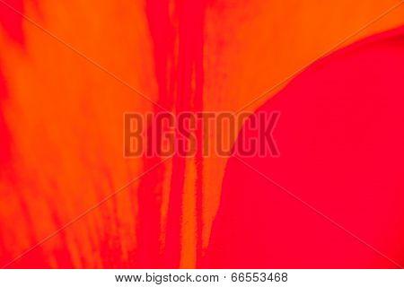 Closeup Of The Petals Of The Red-orange Tulip Flower
