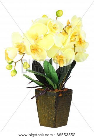 Flowers Of Yellow Orchid