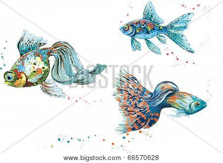 Three colorful fish isolated on white background