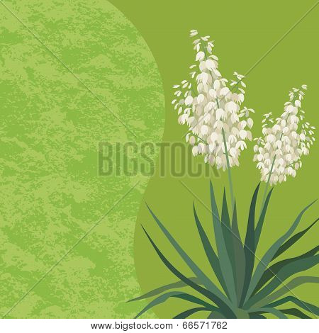 Background with flowers Yucca