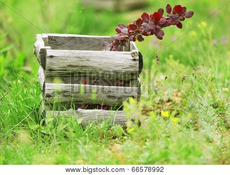 Old wooden box on green grass