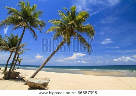 Atilt Coconut Tree With Stone On The Beach