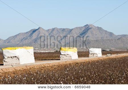 Cotton Modules