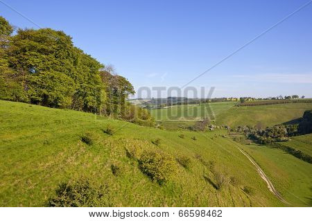 Yorkshire Wolds Pasture