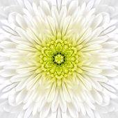 foto of kaleidoscope  - White Mandala Concentric Chrysanthemum Flower Kaleidoscope Center - JPG