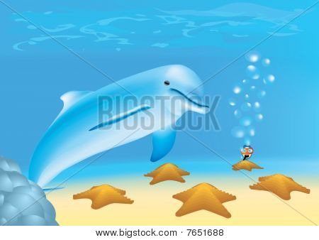 Diver Is Looking At A Dolphin And Sea-stars Underwater