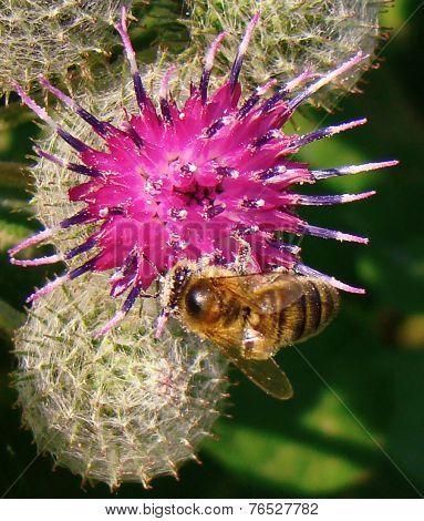 Bee Velcro configurations