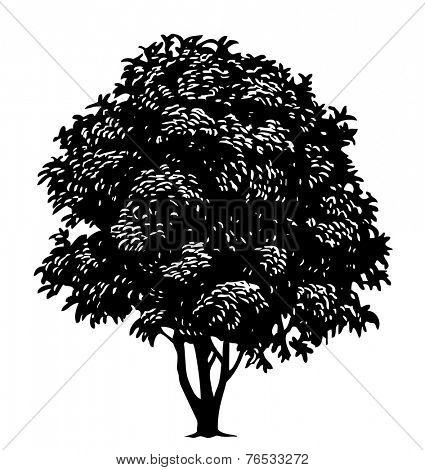 Vector tree in engraved style