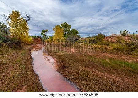 Beautiful Autumn Trees Utah Canyonlands Fall Landscape