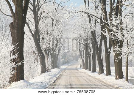 Country road among frosted trees
