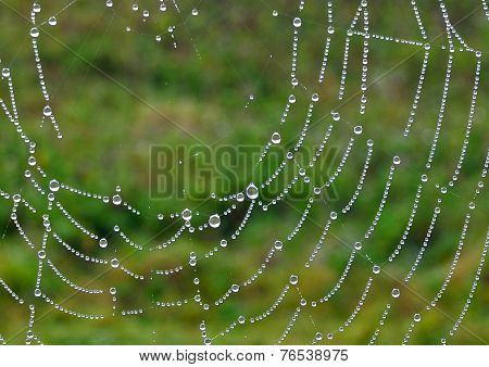 Droplets on a Spiders Cobweb