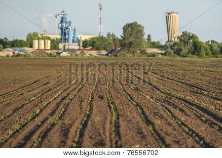 Cultivated land angle shot