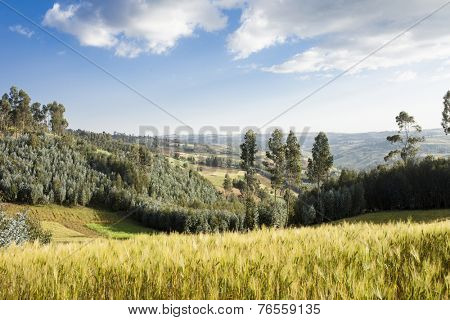 patchwork of farmland and forest in the highlands of Ethiopia