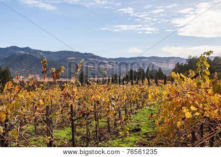 Yellow Vines