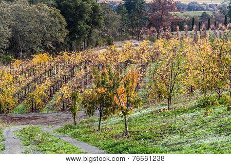 Vines Lines