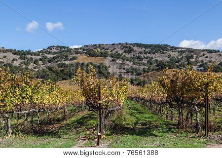 Vineyard Vines And Wines