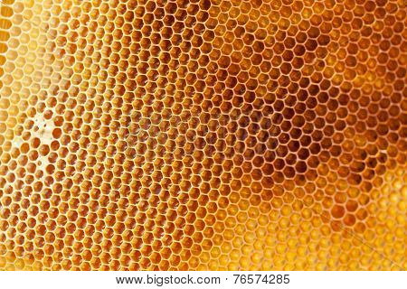 Bee honeycombs filled med close up
