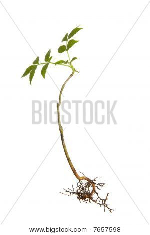 Young isolated plant