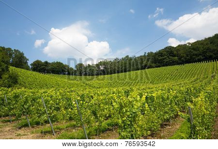 nice vineyard in Nordrhein-Westfalen, Germany