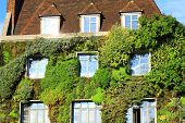 stock photo of climber plant  - House covered with plants climbing on the wall - JPG