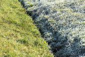 picture of grass area  - Frost and defrost area of grass in the morning.