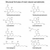 stock photo of overdose  - Chemical formulas of natural cannabinoids - JPG