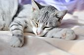 pic of sweet dreams  - sweet dreams of cat on the sofa at home - JPG