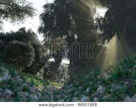 Beautiful sunbeams in green forest background