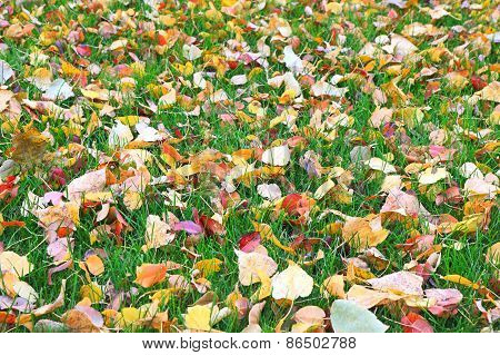 Fallen Leaves On Green Grass