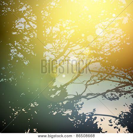 summer design, forest trees, nature green wood sunlight natural green background. Vector