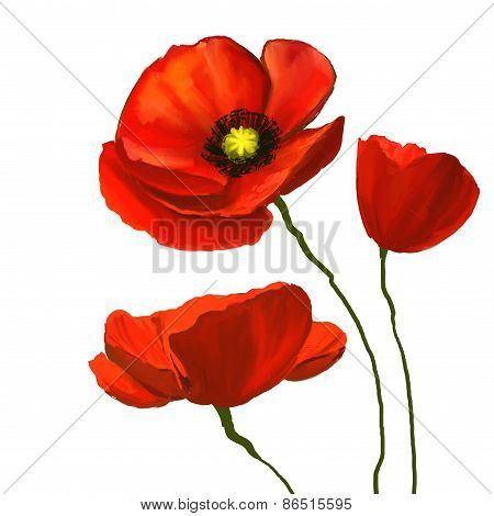 flower poppies vector illustration  hand drawn  painted watercolor