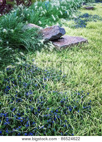 Beautiful Summer Garden With Stones And Blue Flowers