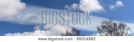 Panoramic View Of The Tops Of The Trees And The Sky
