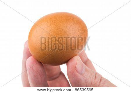 Brown Chicken Egg In Fingers Men