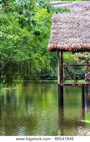 Balcony In The Jungle