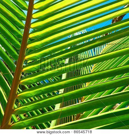Palm tree leaf on beach at Seychelles, La Digue