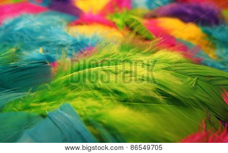 Colored Feathers Background
