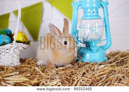 Rabbit Near The Lantern