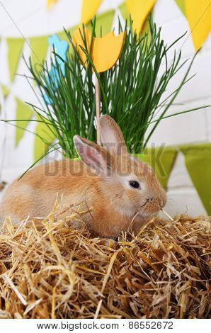 Rabbit Eats Hay