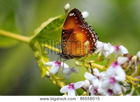 Beautiful butterfly standing on flower, outdoor