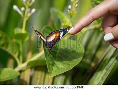 tame butterfly allowed to touch it, enjoys pampering