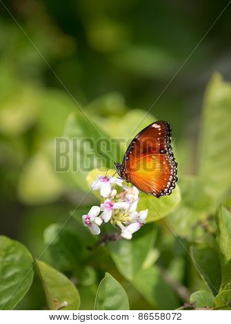 Tiny, delicate butterfly feeding on a summer flower against green background