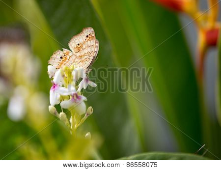 elegant butterfly in nature standing on flower