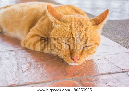 Pretty Cat Sleep In Outside The House Image